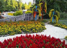 上海植物园菊花观赏
